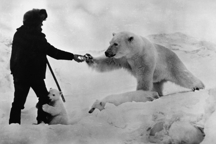 Image result for polar bears and people